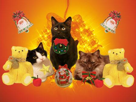 CAKFXRLN3にゃんクリスマス1