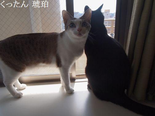 kurokohaku2_2014092815094061f.jpg