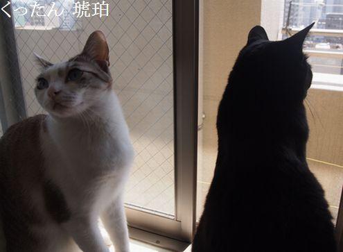 kurokohaku3_2014092815094225e.jpg