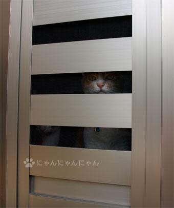 外に出たいです