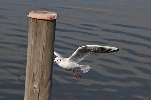 bird101212_1.jpg