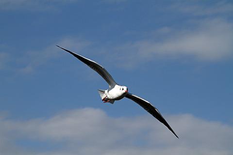 bird101212_2.jpg
