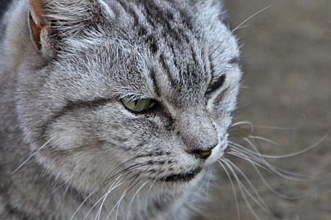 cat110130.jpg