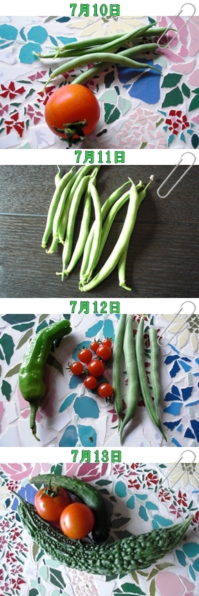 7月11日~収穫
