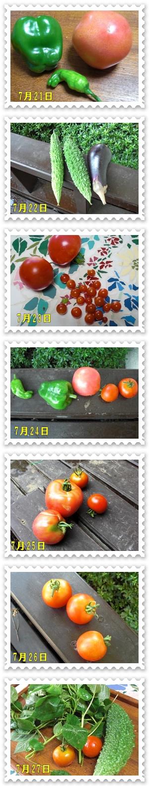26日の収穫一覧