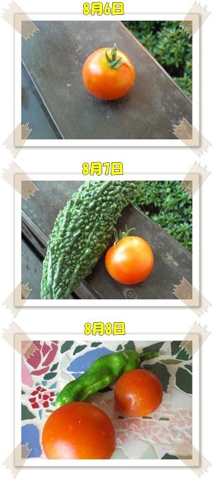 8月6日からの収穫