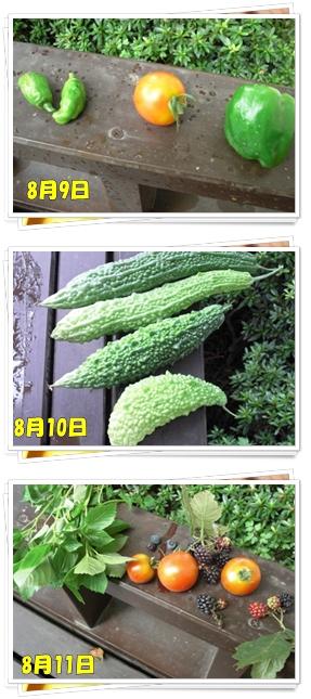 8月9日からの収穫