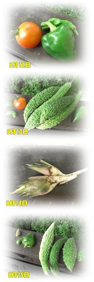 8月12日からの収穫