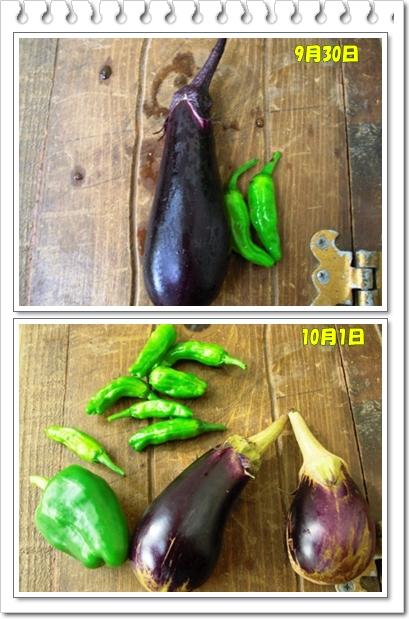 9月30日からの収穫