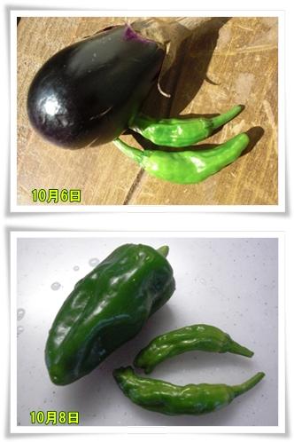 10月6日からの収穫