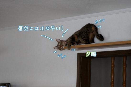 10_20120324084641.jpg