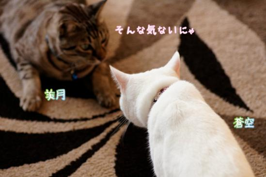 10_20120328071140.jpg
