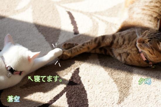 10_20120409080507.jpg