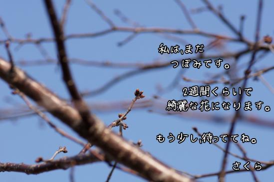 10_20120422082306.jpg