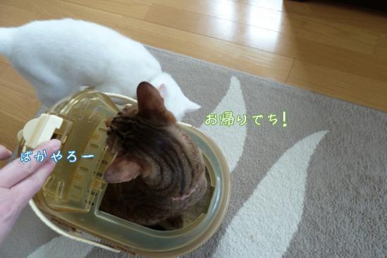 11_20120511232429.jpg