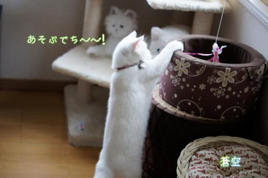 11_20120605081416.jpg