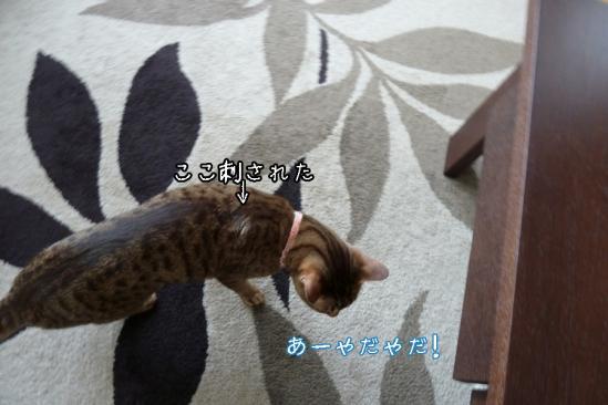 12_20120511232428.jpg