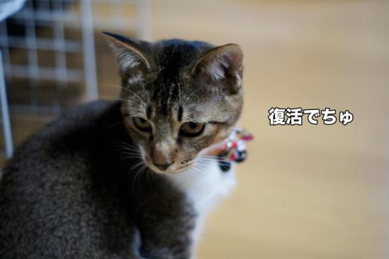 12_20121117102736.jpg