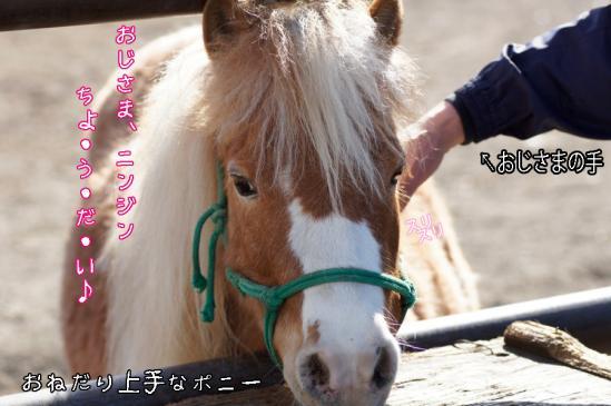 14_20120504231831.jpg