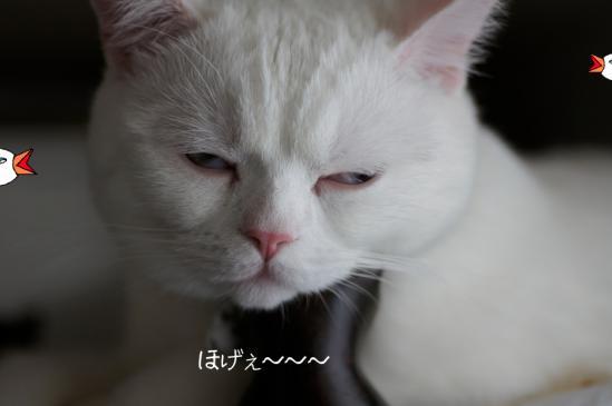1_20120321140115.jpg