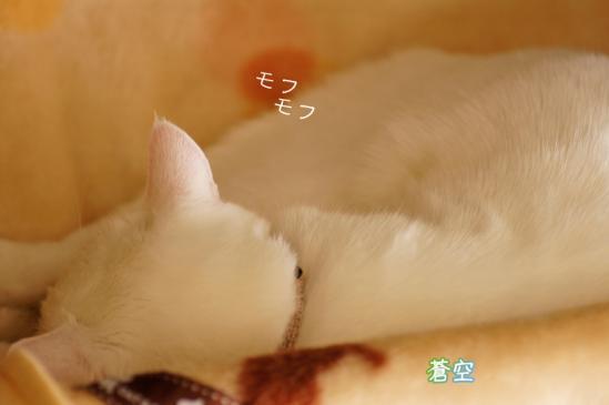 1_20120327081620.jpg