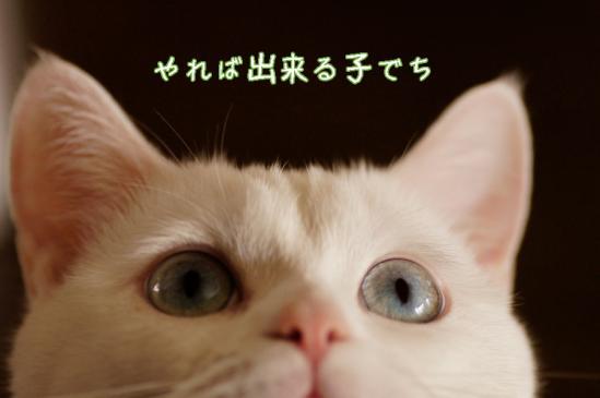 1_20120403002953.jpg