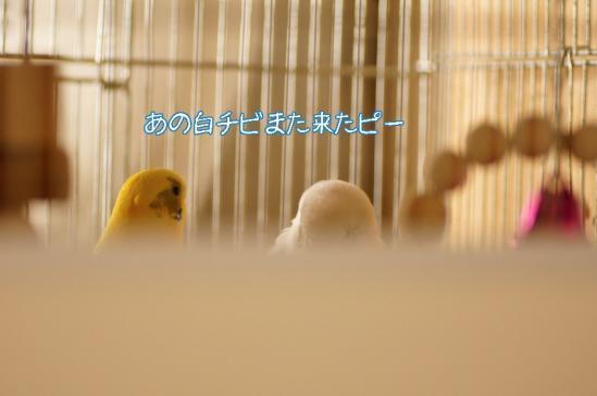 1_20120414082920.jpg