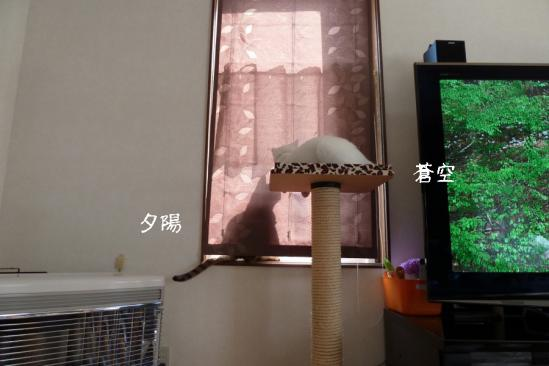 1_20120525080058.jpg