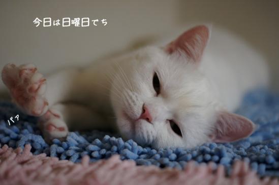 1_20120527075615.jpg