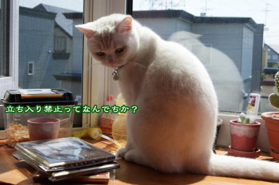 1_20120611094909.jpg