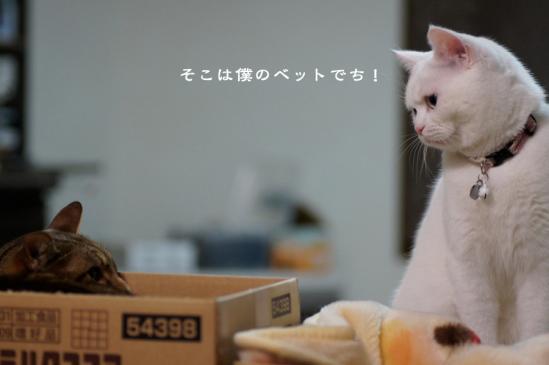 1_20120614071137.jpg