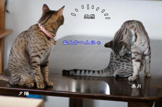 1_20120615083738.jpg