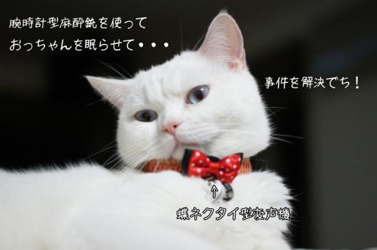1_20121016223404.jpg