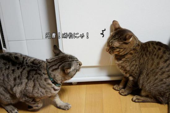 1_20121018080451.jpg