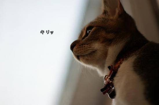 1_20121102094312.jpg