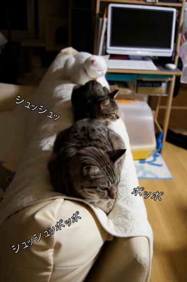 1_20121106003641.jpg