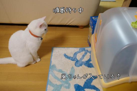 1_20121111011547.jpg
