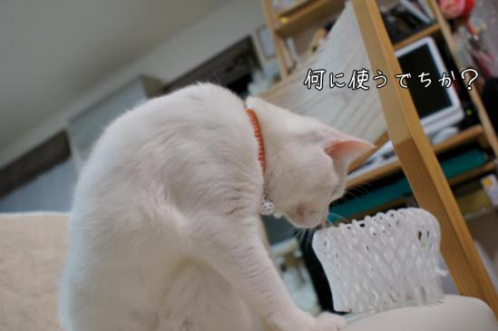 1_20121114101035.jpg