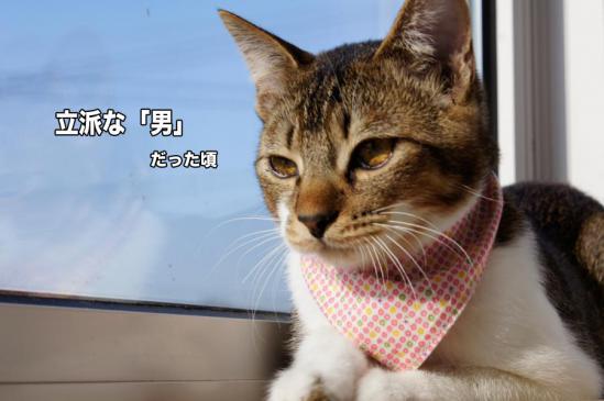 1_20121117075140.jpg