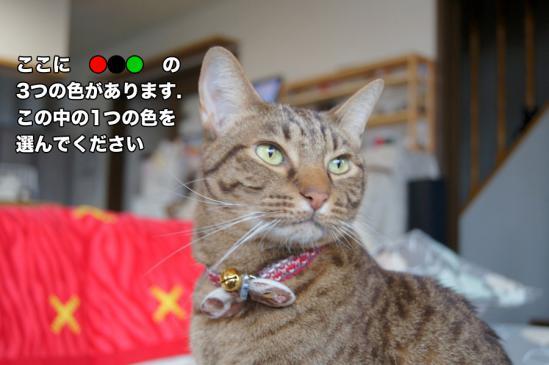 1_20121123102807.jpg