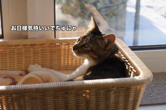 1_20121127010841.jpg
