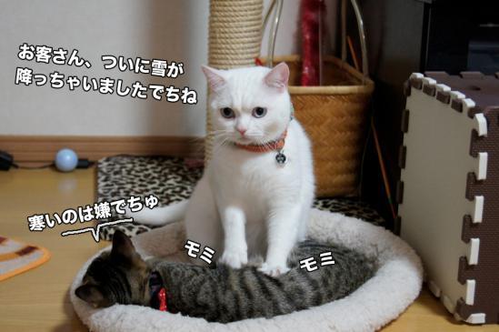 1_20121127195421.jpg