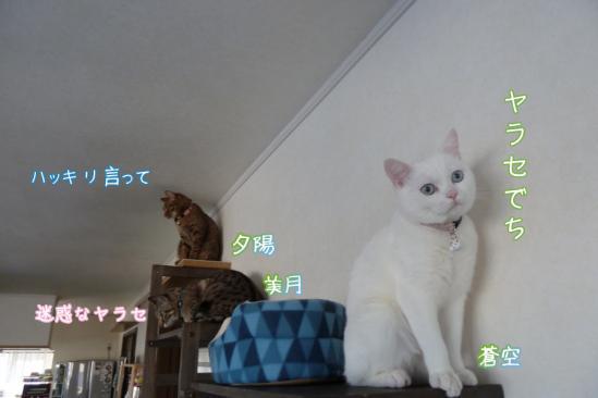 2_20120310190609.jpg