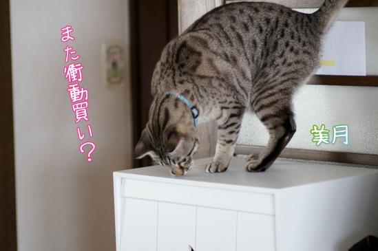 2_20120312103823.jpg