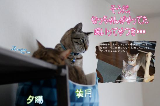 2_20120315100523.jpg