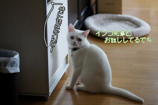 2_20120317224732.jpg
