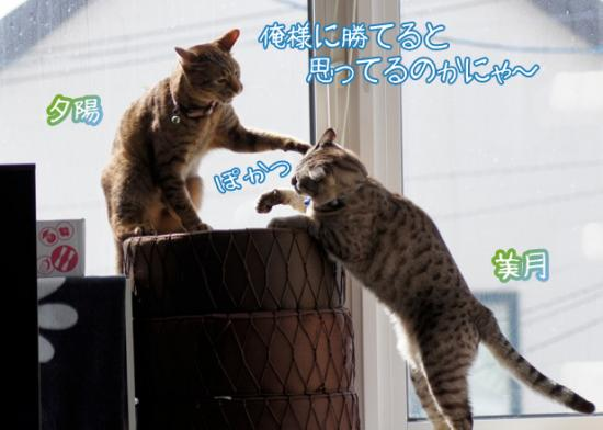2_20120320000354.jpg