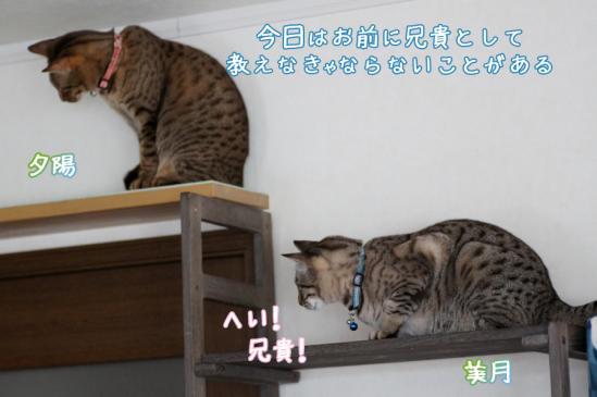 2_20120324084741.jpg