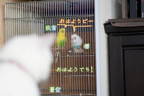 2_20120325091741.jpg