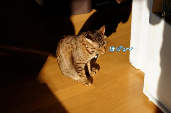 2_20120420080502.jpg